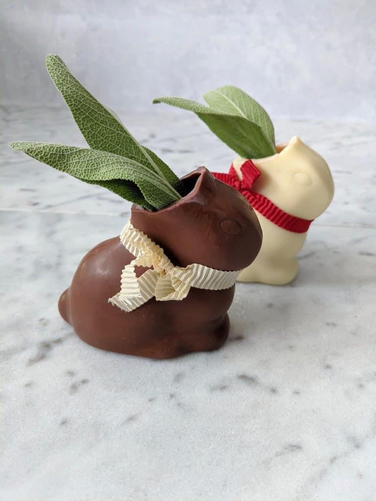 Sage ears on the chocolate bunnies
