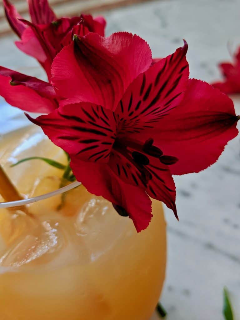 A close up of the red flower garnishing a glass.