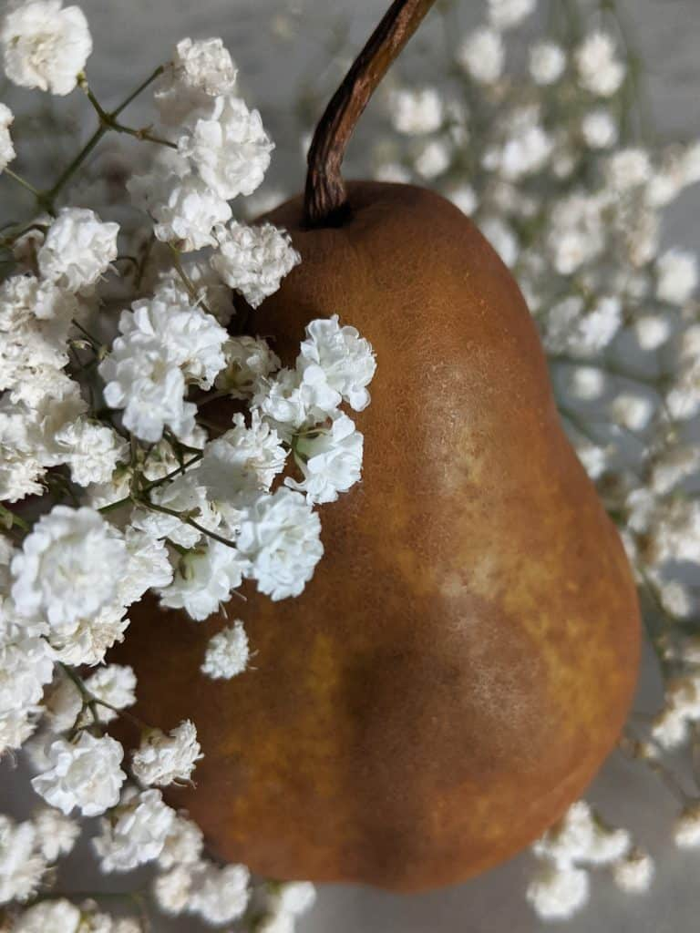 A Bosc pear surrounded by baby's breath flowers.