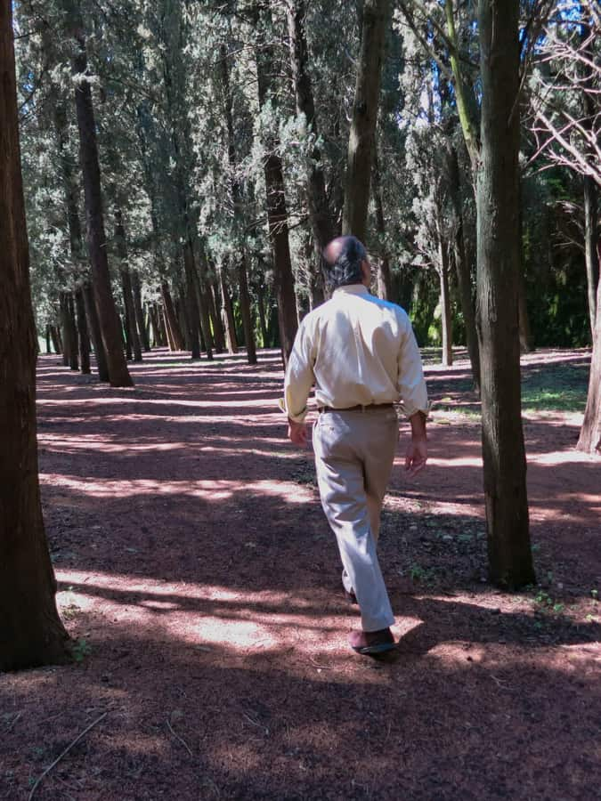 A picture taken from behind of a man walking through a forest.